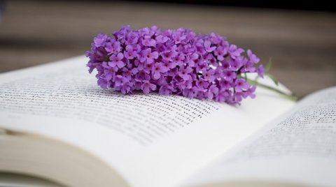 Чтение Библии,Библия