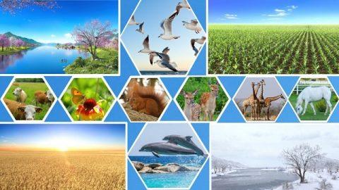 На пятый день жизнь многообразных и разнородных форм разными способами демонстрирует власть Творца