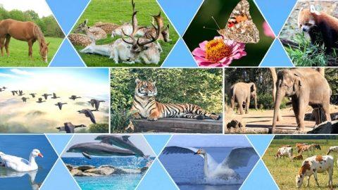 На шестой день Творец говорит, и один за другим появляются все те виды живых существ, что были у Него в мыслях