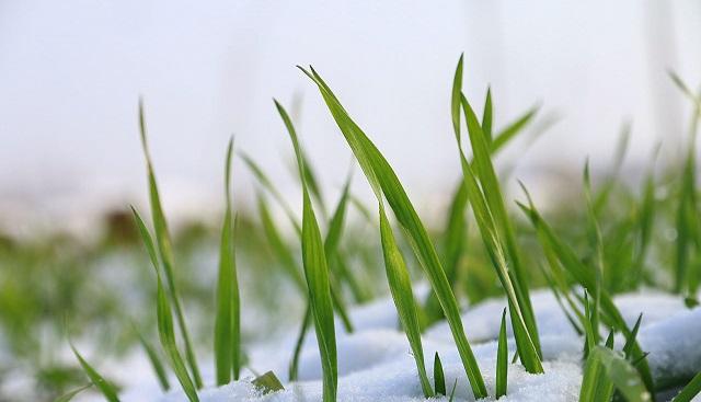 снег и трава