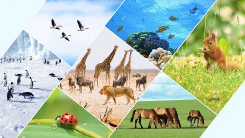 Бог определил пределы для различных птиц и зверей, для рыб, насекомых и для всех растений