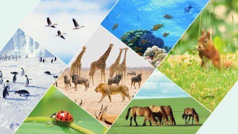 Бог определяет пределы для различных птиц и зверей, для рыб, насекомых и для всех растений